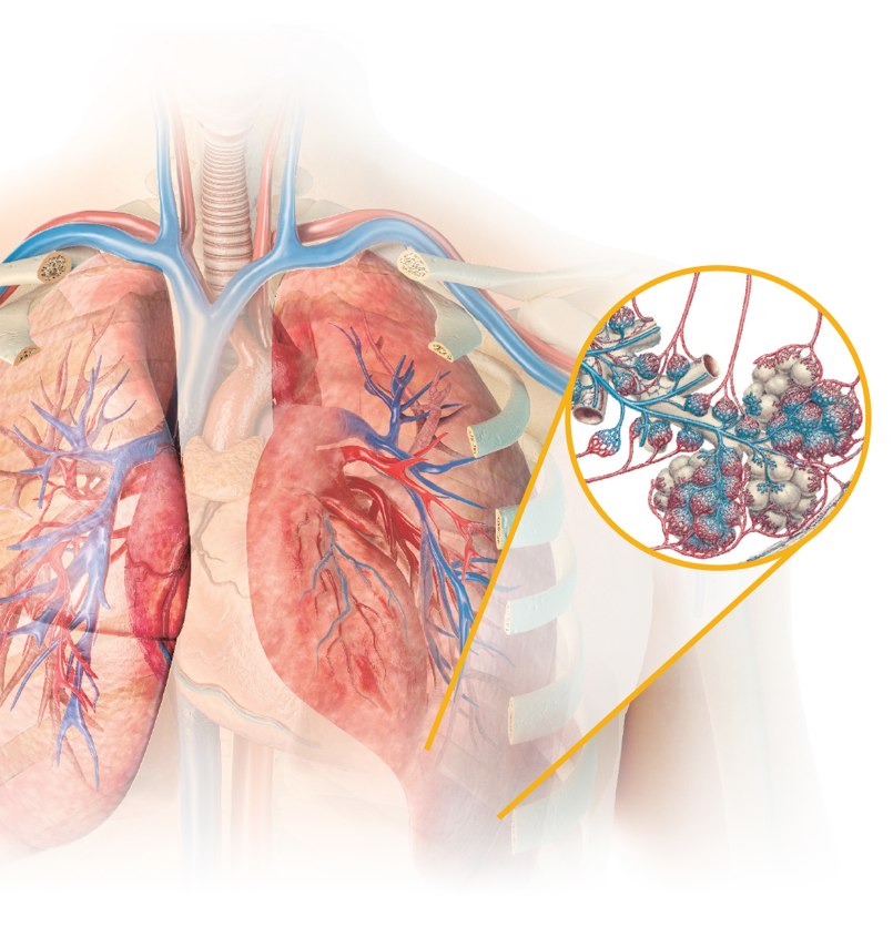 TYVASO's direct-to-lung delivery results in higher concentrations of the drug in the pulmonary arterial vasculature.
